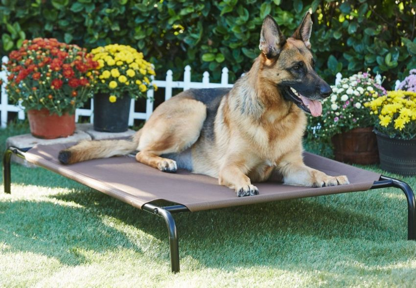 Frisco Steel-Framed Elevated Dog Bed