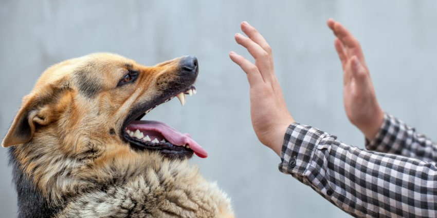 Why do dogs turn on their owners? There are a lot of reasons. Read on to learn why it happens so you can prevent tragedy from striking.