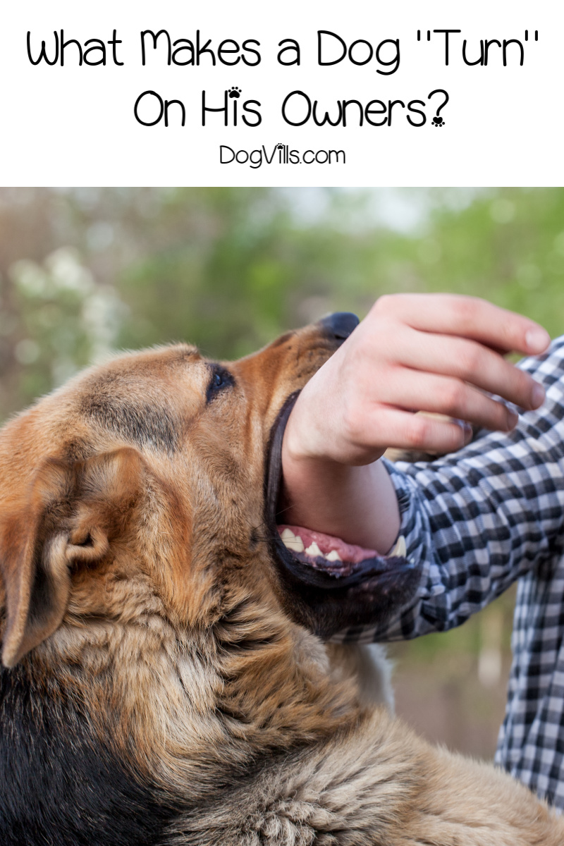 Why Do Dogs Turn on Their Owners – Reasons Dogs Bite
