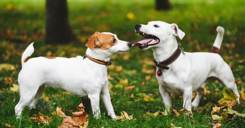 Do dogs get sad when you get another dog? Read on for the answer, plus other emotions your dog may experience beyond depression.