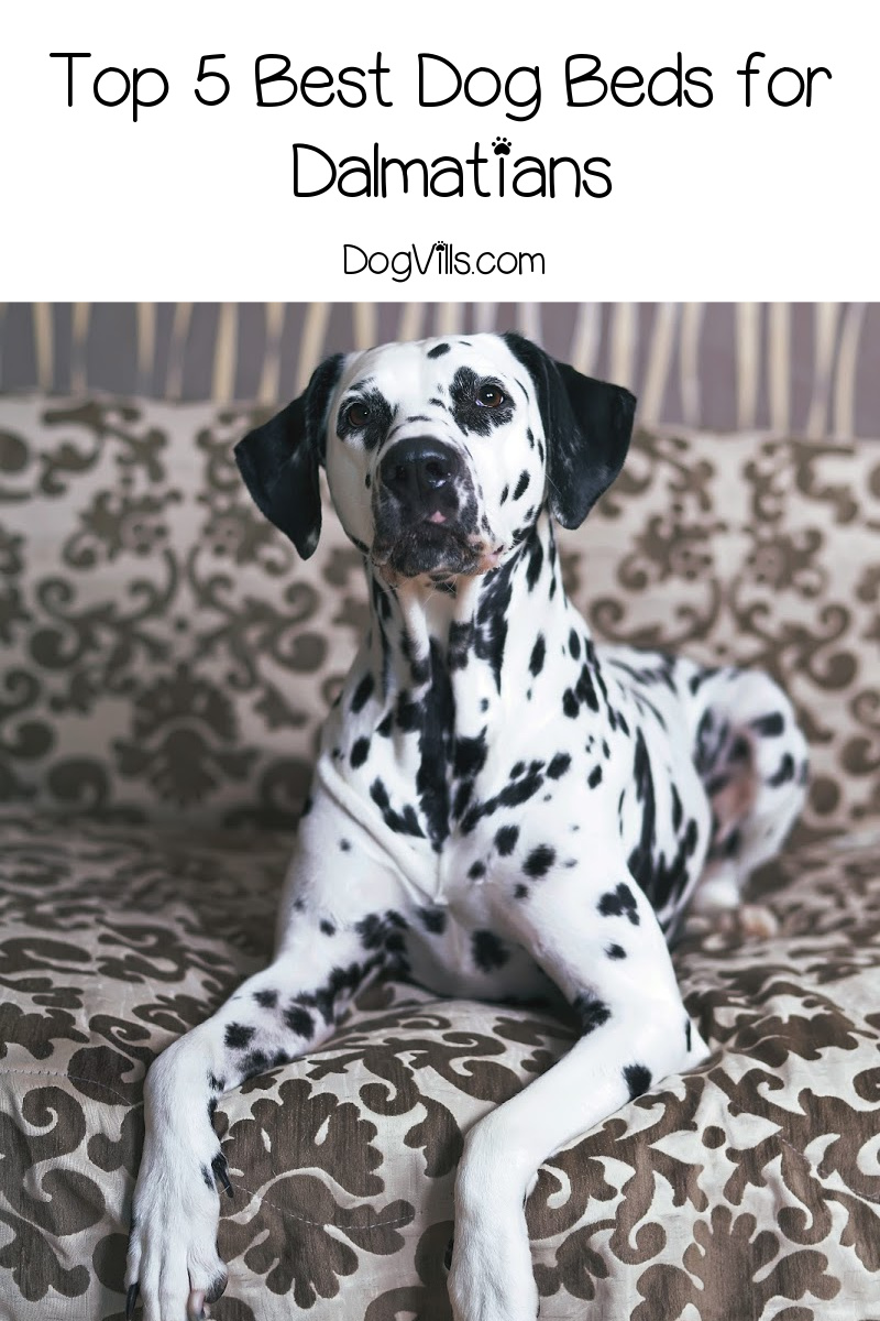 Top 5 Best Dog Beds for Dalmatians (with Complete Reviews)