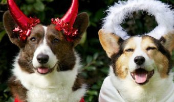 No tricks! You'll find nothing but treats on our list of 100 Halloween-inspired dog names! Check them out!
