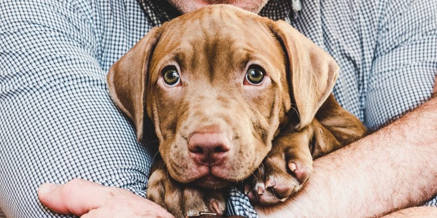 Help, my puppy wants to be held all the time and he cries when I put him down!If that sounds familiar, don't worry, we've got you covered.