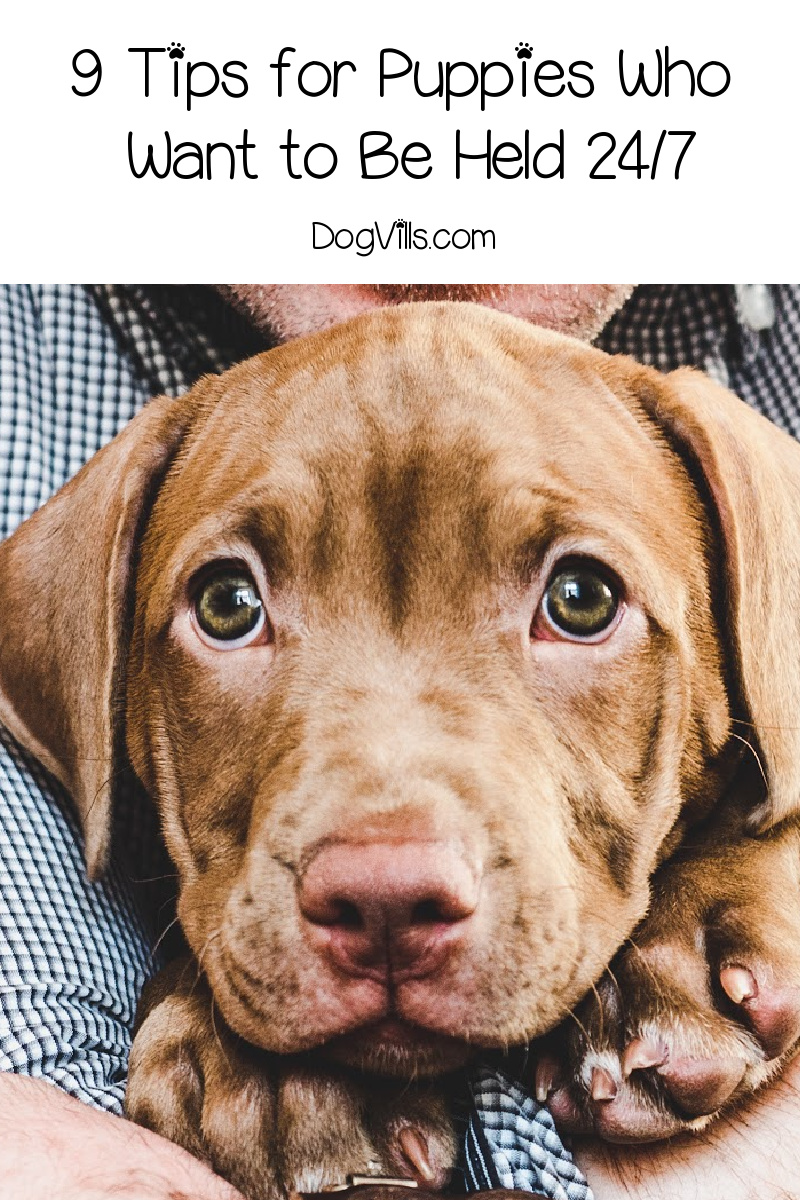 9 Fantastic Tips to Try When Your Puppy Wants to Be Held All the Time
