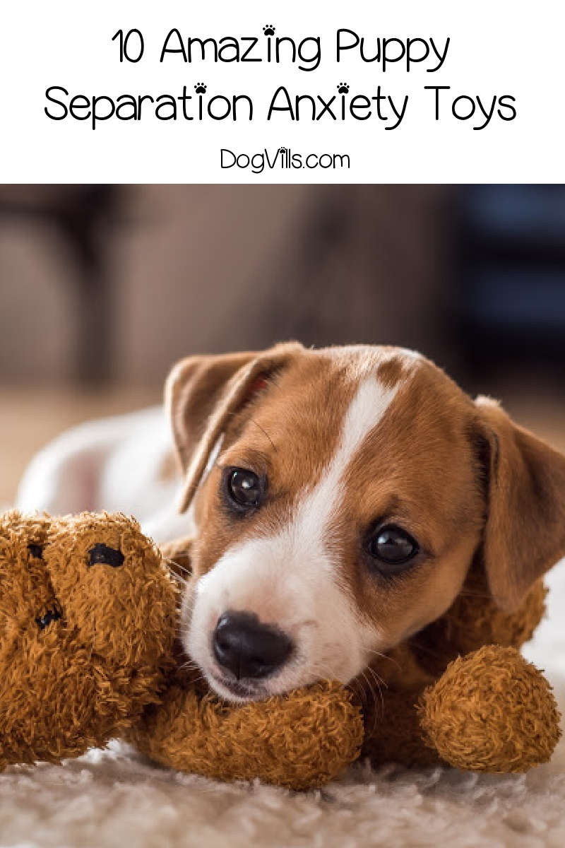 10 Amazing Puppy Separation Anxiety Toys to Soothe Your Dog's Stress
