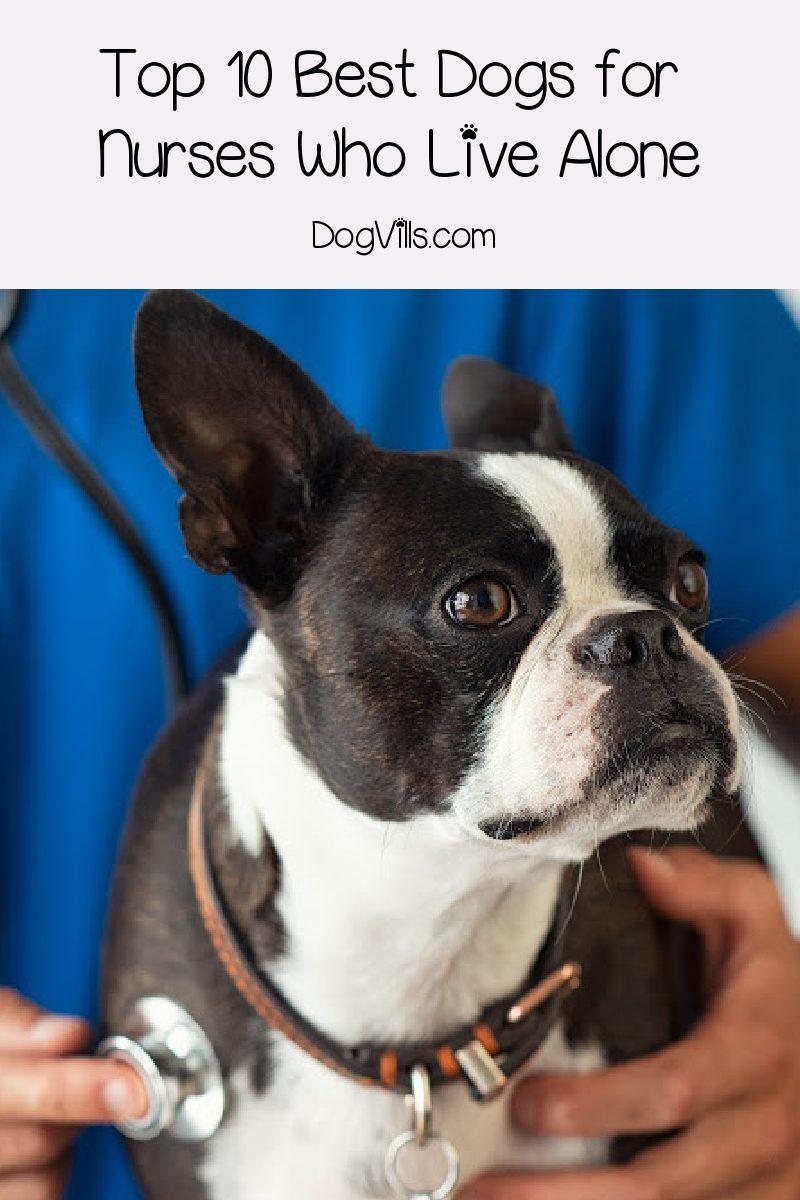 Top 10 Dog Breeds For Nurses (Especially Those Who Live Alone)