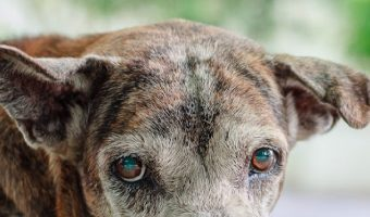 Anxiety in older dogs can be caused by a variety of issues. Your vet and these tips will help you find the best way to help your dog. Take a look!