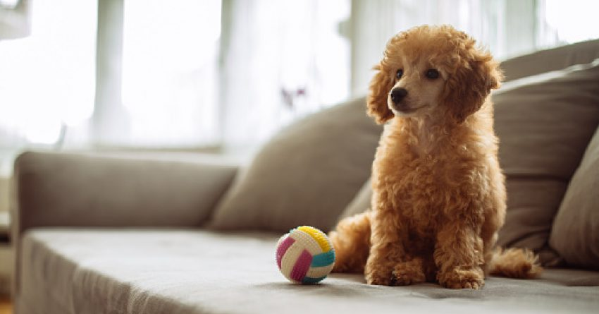 100 Amazing Apricot Dog Names for Your Golden Beauty