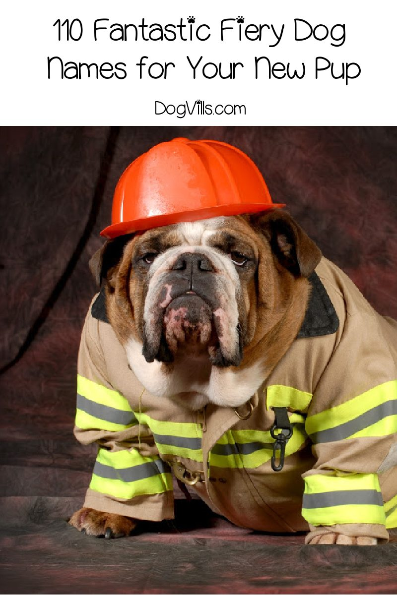 110 Fantastic Fiery Dog Names for Your New Pup