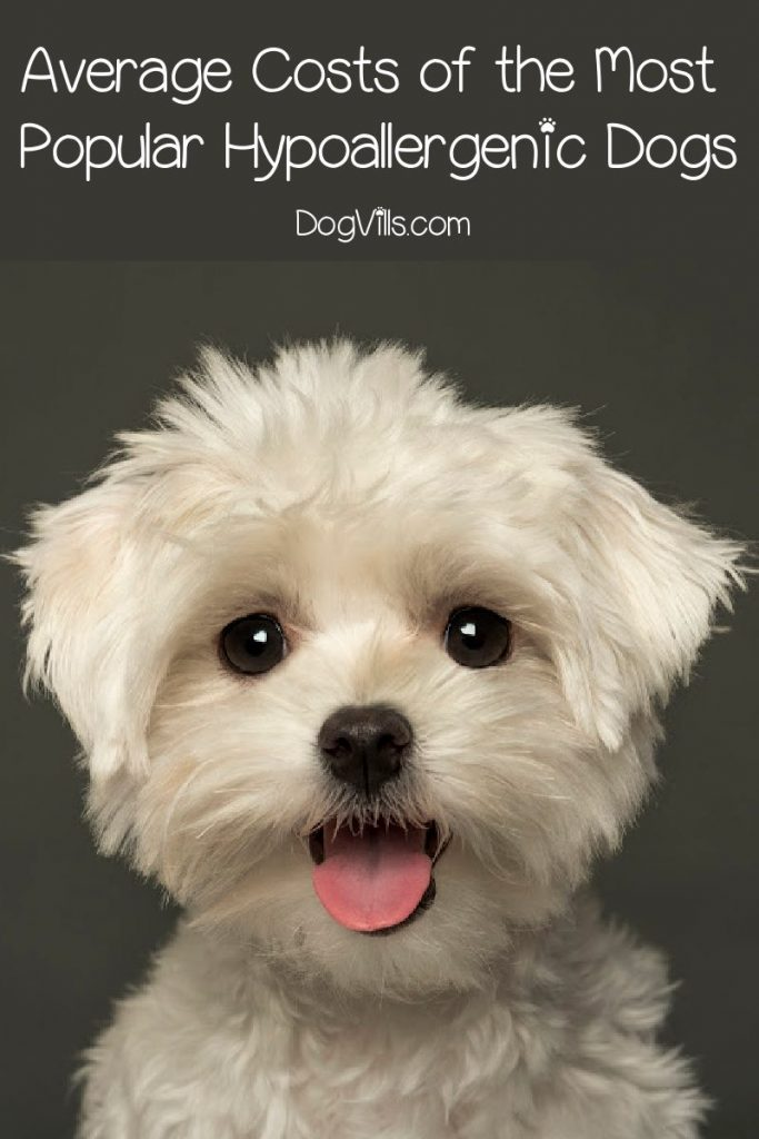 These are the average price ranges for the some of the most popular hypoallergenic dog breeds.
