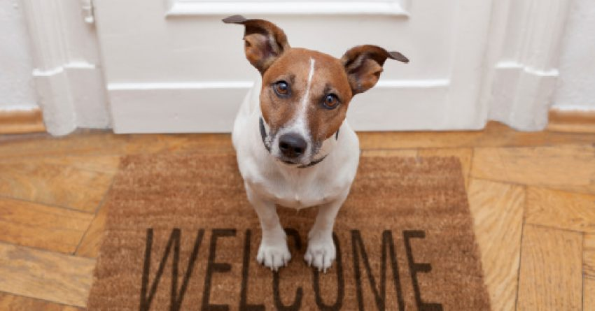 Introducing a new dog to an aggressive dog takes time and planning. These tips will help you do it the safest way possible.