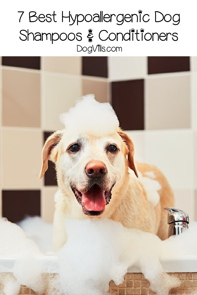 7 Best Hypoallergenic Dog Shampoos and Conditioners for Sensitive Skin