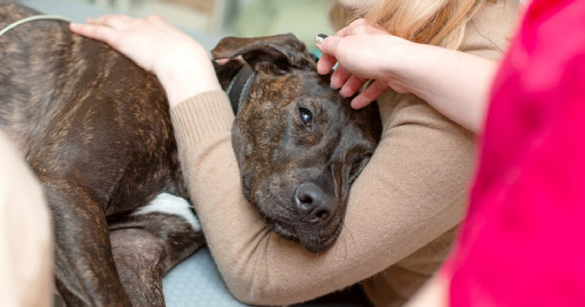 """""""My dog is dying, but I can't afford a vet"""" is a common topic today. We'll discuss resources for when a dog is dying and finance are tight."""
