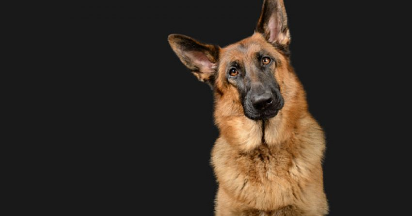 If you're looking for some tough police dog names for your favorite pup, then here is where you should be. Check out 100 that we love!