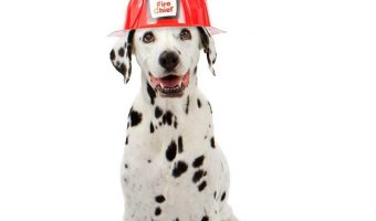 Need some fantastic firefighter dog names? We've got you covered with 100 ideas inspired by one of the noblest professions.