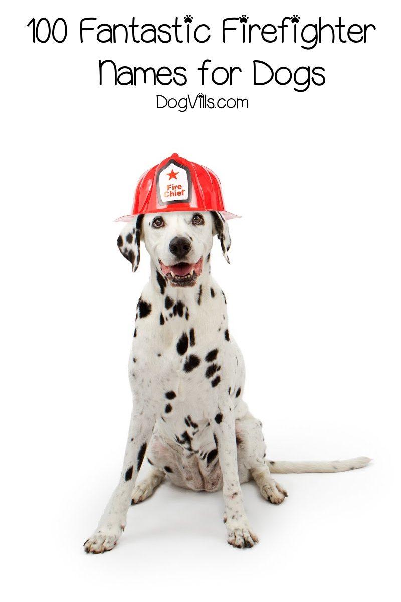 100 Fantastic Firefighter Dog Names for Males & Females