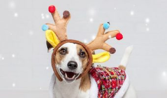 Looking for some of the cutest Christmas advent calendars and holiday treats for dogs? Check out 15 that your dog will devour!