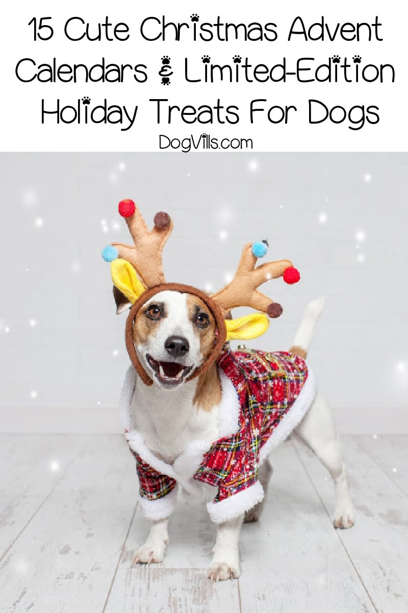 15 Cute Christmas Advent Calendars & Limited-Edition Holiday Treats For Dogs