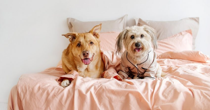 These tips will help make your second dog sleeping arrangements go more smoothly, whether you're introducing a puppy or an older second dog!