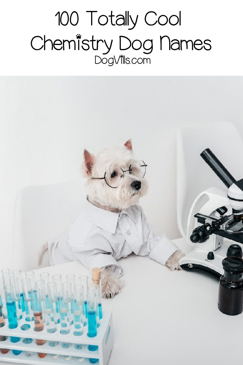 100 Totally Cool Chemistry Dog Names