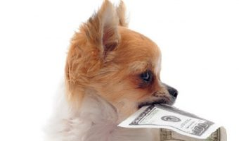 If you're looking for money-related dog names, we've got you covered! Check out 100 ideas inspired by the rich and famous, foreign currency, and more!