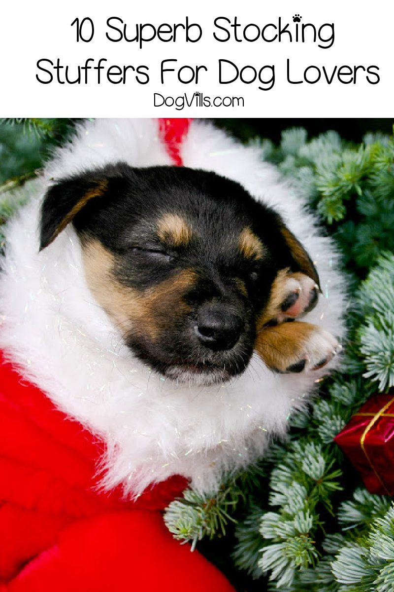 10 Superb Stocking Stuffers For Dog Lovers