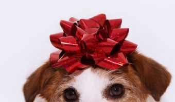 Looking for the best personalized gifts for dog lovers? These 10 ideas make perfect holiday, birthday, or even memorial gifts! Check them out!