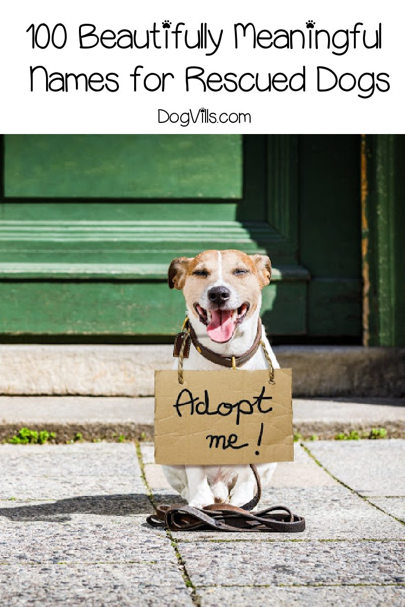 100 Beautifully Meaningful Names for Rescued Dogs