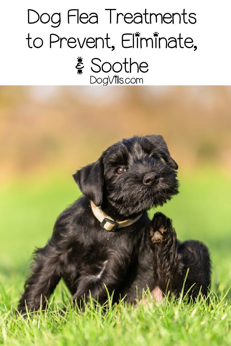 Dog Flea Treatments to Prevent, Eliminate, and Soothe
