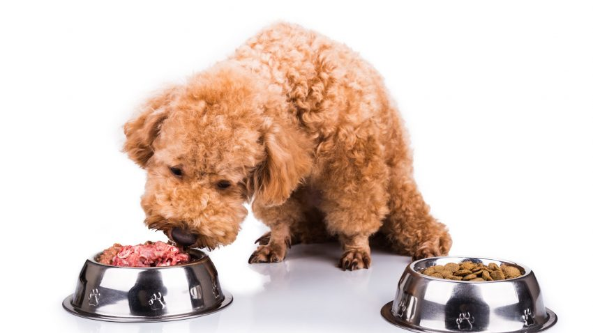 What is the best hypoallergenic dog food for a yeast infection? Check out our top 5 picks, plus learn why the right food makes a difference!