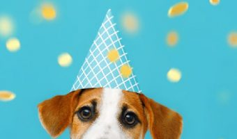 Looking for some cute birthday gift ideas for dog lovers? Check out these 10 affordable ideas that will warm their hearts!