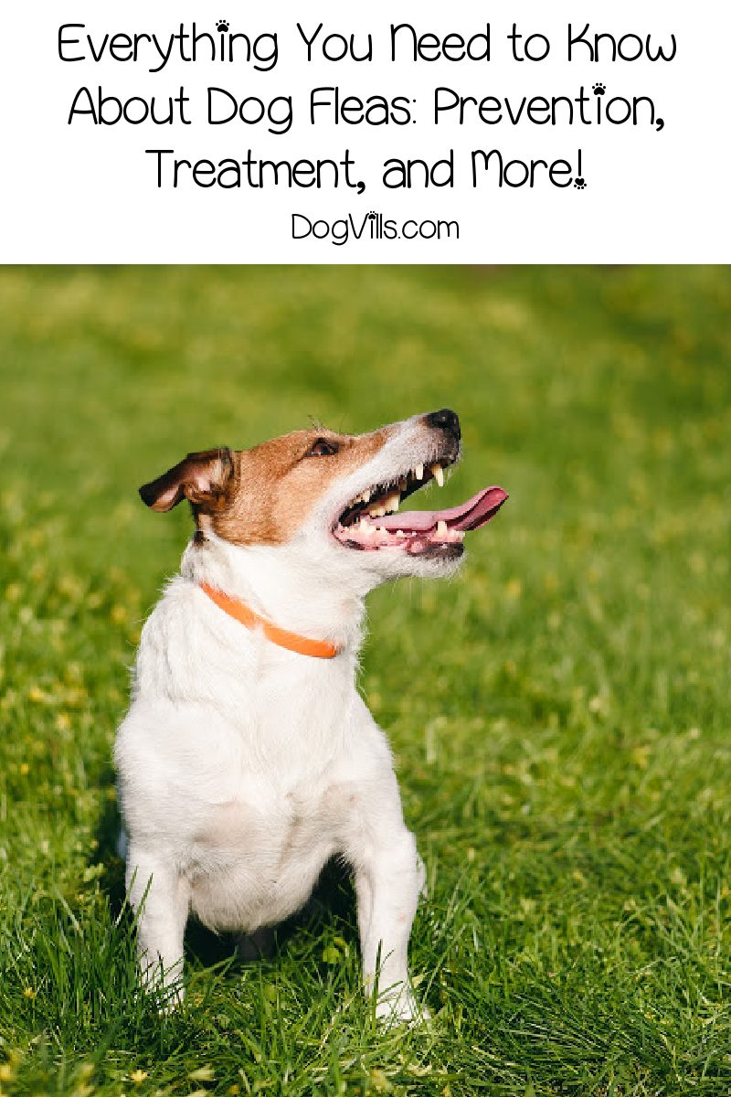 Everything You Need to Know About Dog Fleas: Prevention, Treatment, and More!