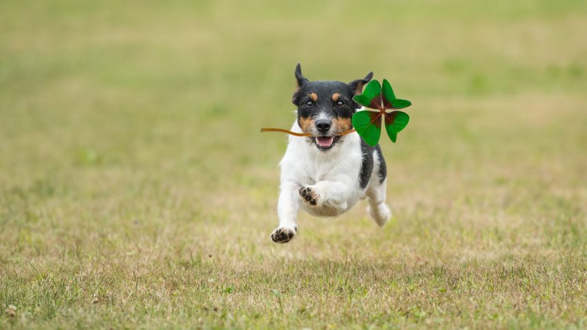 These 100 amazing lucky names for dogs are perfect for expressing how fortunate we are to have our canine pals! Check them out!!