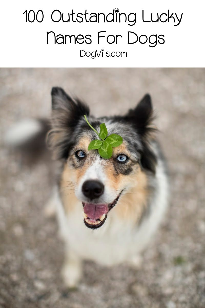 100 Outstanding Lucky Names For Dogs
