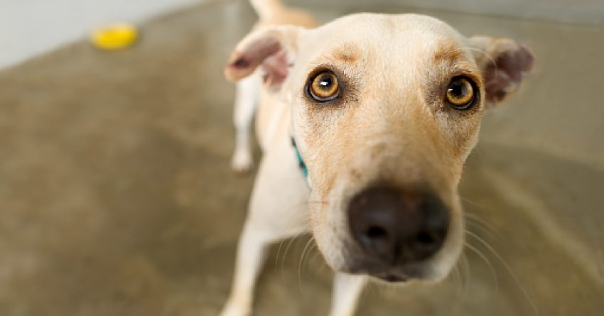 Looking for some brilliant and meaningful names for your newly rescued dog? Check out 100 we love!